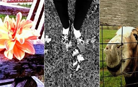 Photography Develops 7th Graders' Art Skills