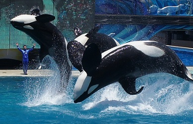 Whale Show Coming to an End at Sea World